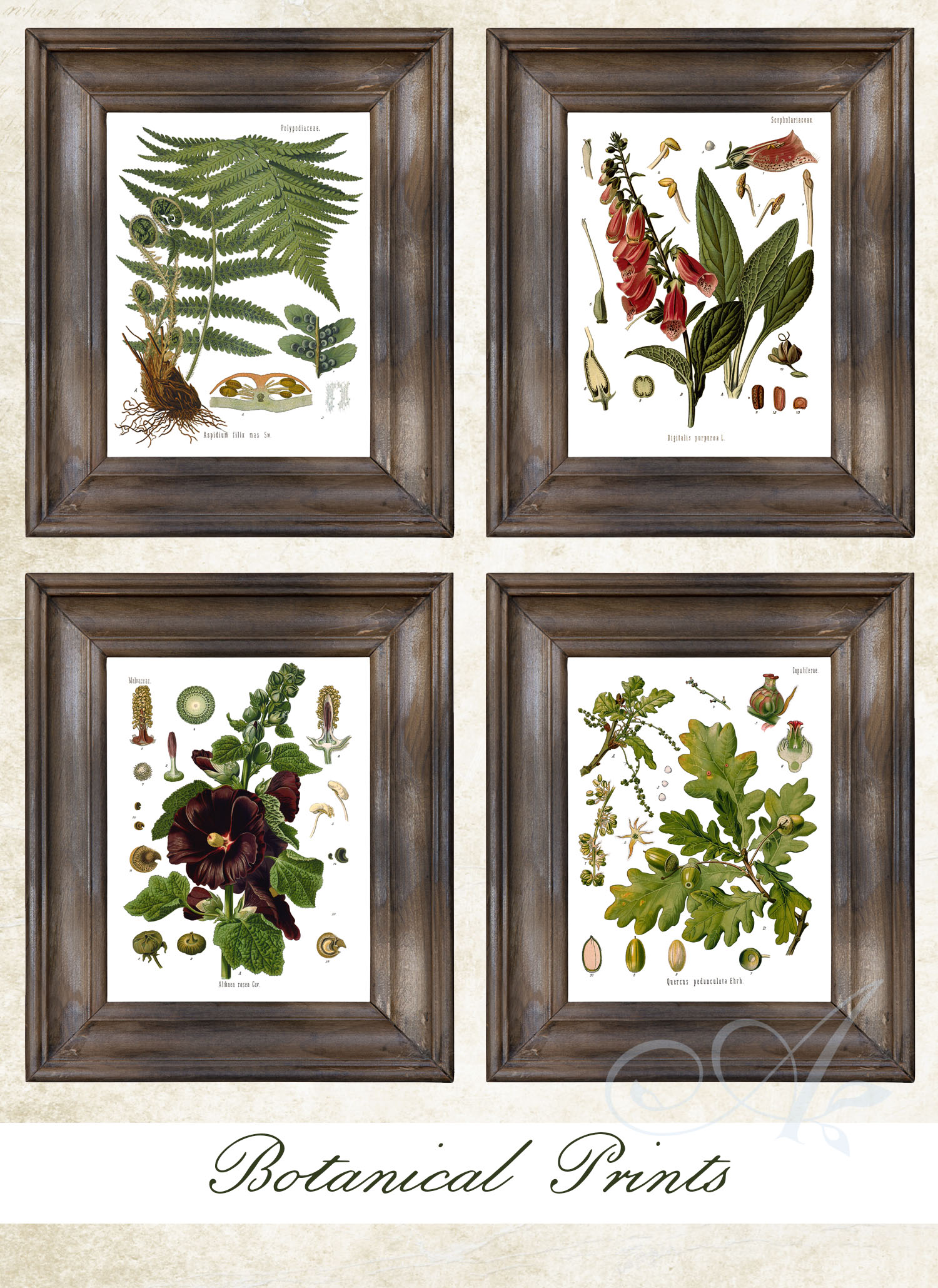 botanical prints download