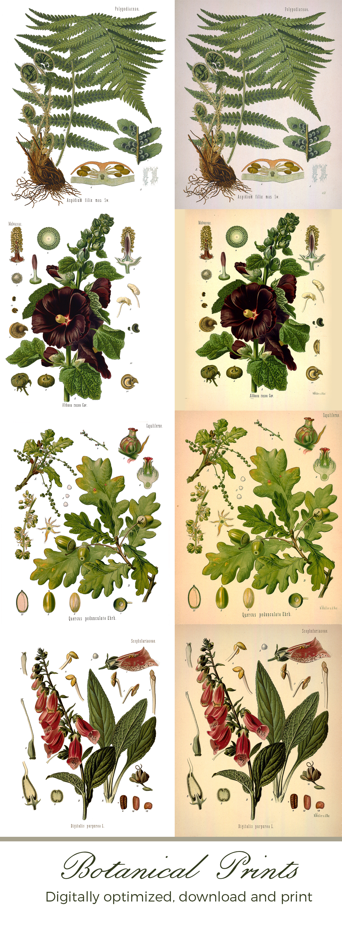 botanical art prints download